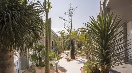 Video: Landscape architect Anouk Vogel on using desert plants and courtyards for Jameel Arts Centre